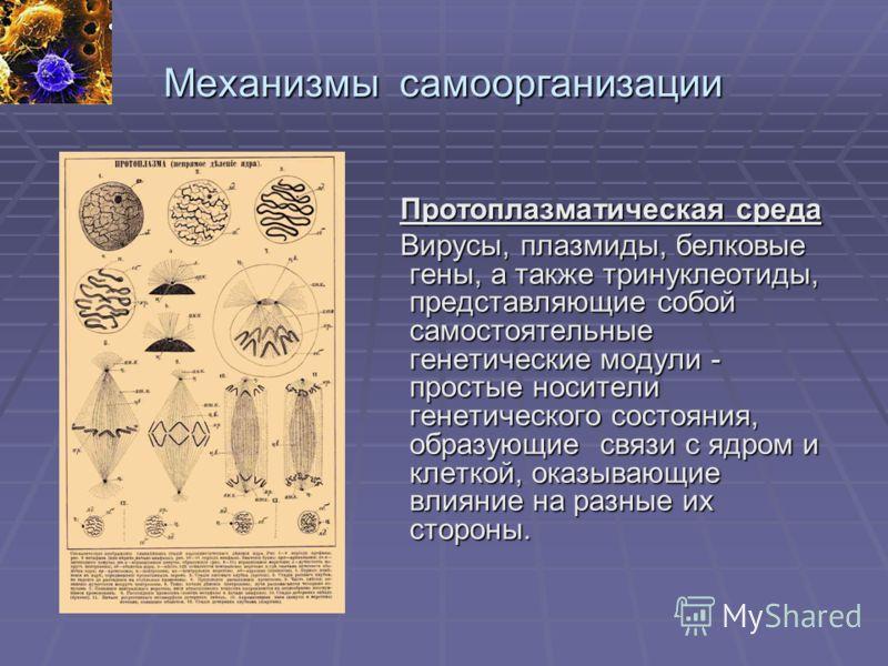 Механизмы самоорганизации Протоплазматическая среда Протоплазматическая среда Вирусы, плазмиды, белковые гены, а также тринуклеотиды, представляющие собой самостоятельные генетические модули - простые носители генетического состояния, образующие связ