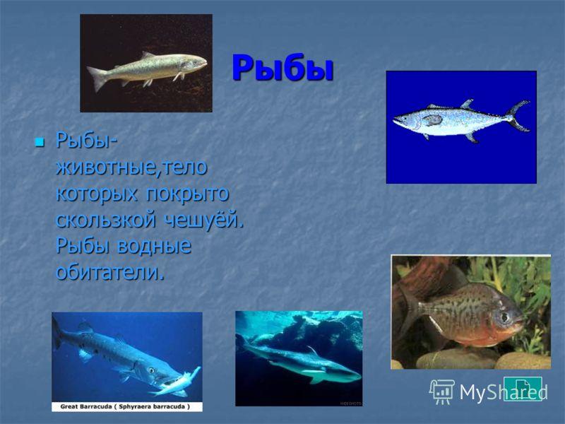 Рыбы Рыбы- животные,тело которых покрыто скользкой чешуёй. Рыбы водные обитатели. Рыбы- животные,тело которых покрыто скользкой чешуёй. Рыбы водные обитатели.