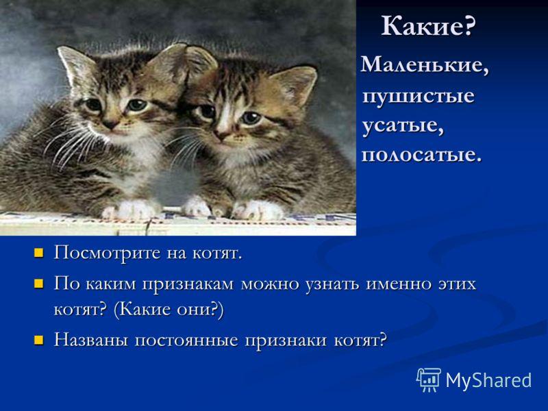 Какие? Маленькие, пушистые усатые, полосатые. Какие? Маленькие, пушистые усатые, полосатые. Посмотрите на котят. По каким признакам можно узнать именно этих котят? (Какие они?) Названы постоянные признаки котят?