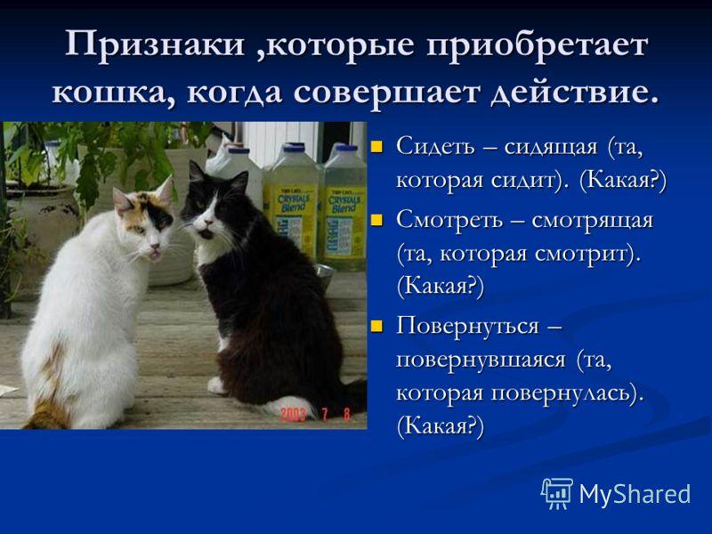 Признаки,которые приобретает кошка, когда совершает действие. Сидеть – сидящая (та, которая сидит). (Какая?) Смотреть – смотрящая (та, которая смотрит). (Какая?) Повернуться – повернувшаяся (та, которая повернулась). (Какая?)