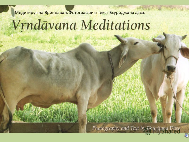 Медитируя на Вриндаван. Фотографии и текст Бхуриджана дача.