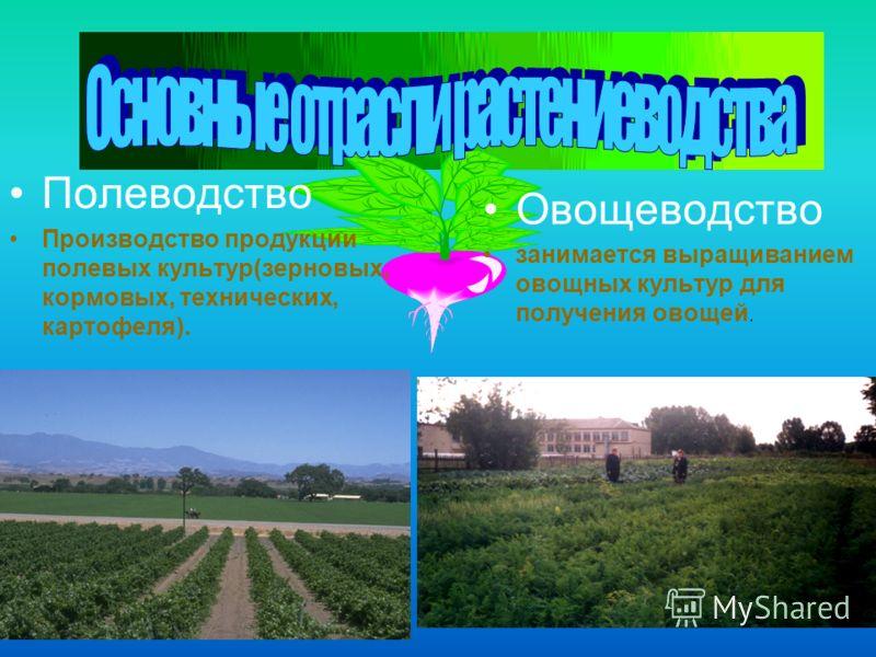 Полеводство Производство продукции полевых культур(зерновых, кормовых, технических, картофеля). Овощеводство занимается выращиванием овощных культур для получения овощей.