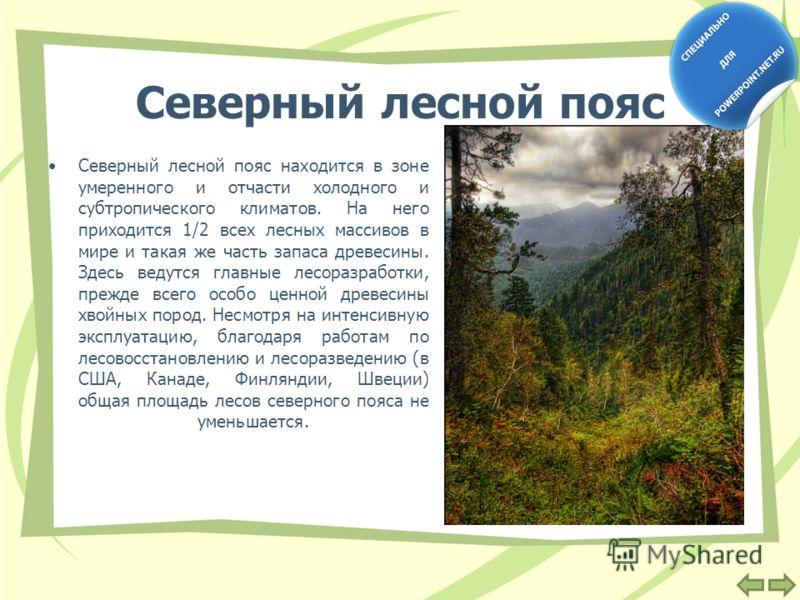 Северный лесной пояс Северный лесной пояс находится в зоне умеренного и отчасти холодного и субтропического климатов. На него приходится 1/2 всех лесных массивов в мире и такая же часть запаса древесины. Здесь ведутся главные лесоразработки, прежде в