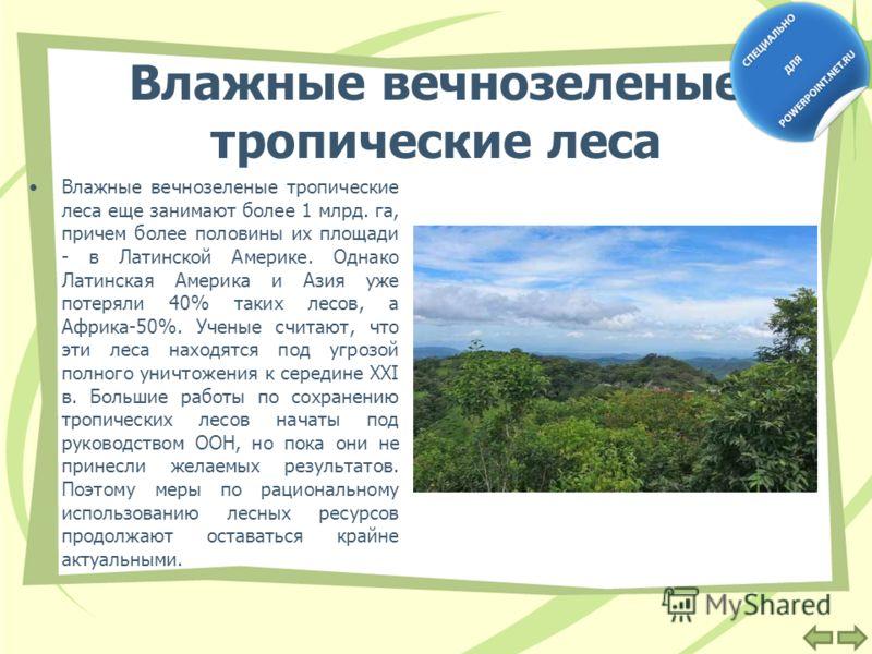 Влажные вечнозеленые тропические леса Влажные вечнозеленые тропические леса еще занимают более 1 млрд. га, причем более половины их площади - в Латинской Америке. Однако Латинская Америка и Азия уже потеряли 40% таких лесов, а Африка-50%. Ученые счит