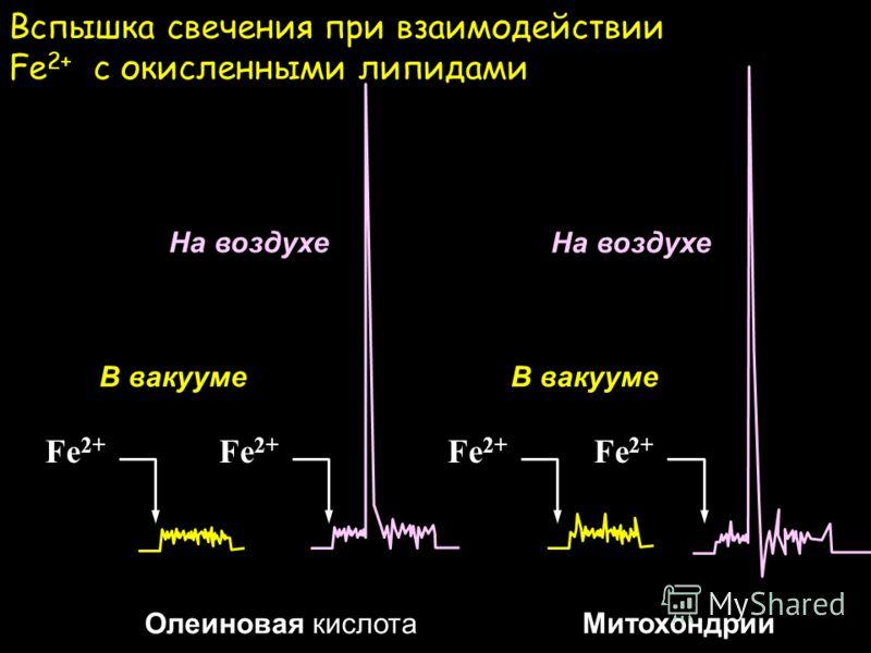 Реакции, ответственные за хемилюминесценцию PM Ось Fe 2+ Ось PM LOOH Fe 2+ + LOOH LO + Fe 3+ LO + LH LOH + L В вакуме: L + O 2 LOO LOO + LOO L=O + LOH На воздухе: