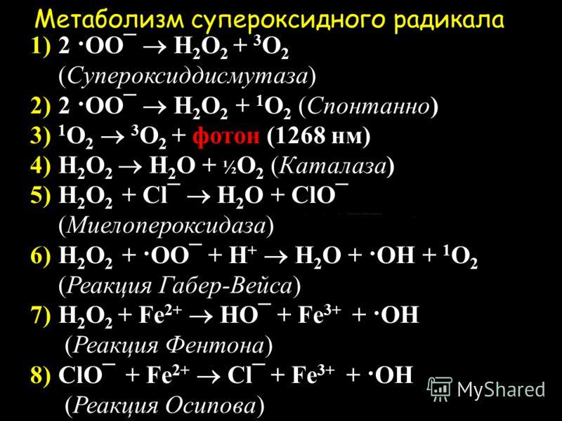Супероксидный радикал Встретив чужеродную частицу, например, бактерию, фагоцит прикрепляется к ней и начинает выделять активные формы кислорода, первая из которых - супероксидный радикал. НАДФН + 2О 2 НАДФ + + 2(О 2 ¯) Реакция катализируется ферментн