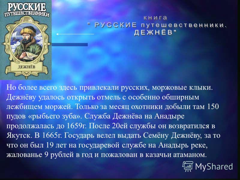 Но более всего здесь привлекали русских, моржовые клыки. Дежнёву удалось открыть отмель с особенно обширным лежбищем моржей. Только за месяц охотники добыли там 150 пудов «рыбьего зуба». Служба Дежнёва на Анадыре продолжалась до 1659г. После 20ей слу