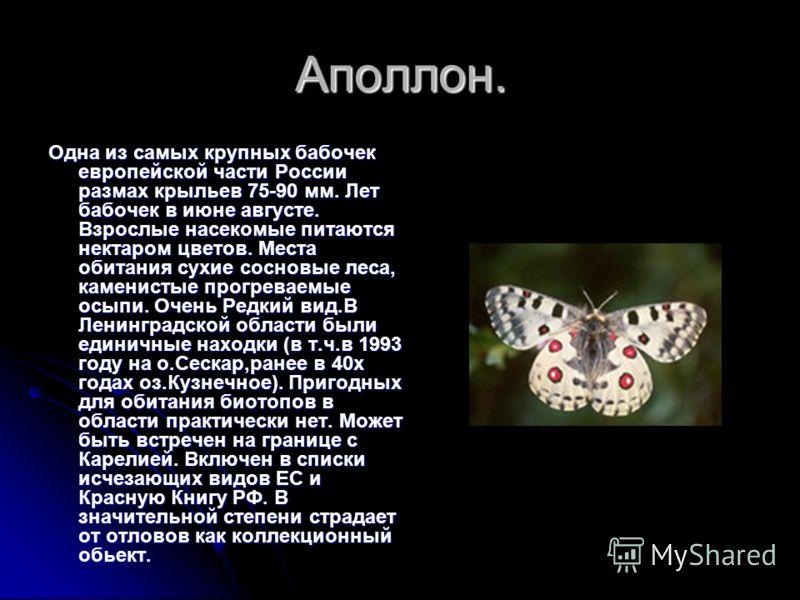 Махаон Широко распространенная бабочка фауны России, однако всюду численность невысока. Крупная, яркая бабочка.50-70 мм. Предпочитает открытые биотопы- закустаренные луга, опушки, зарастающие вырубки. Лет бабочек в мае-июле. Гусеница зеленая с красны