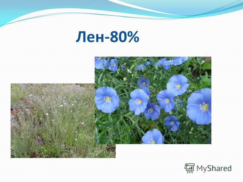 Лен-80% Лен-80%