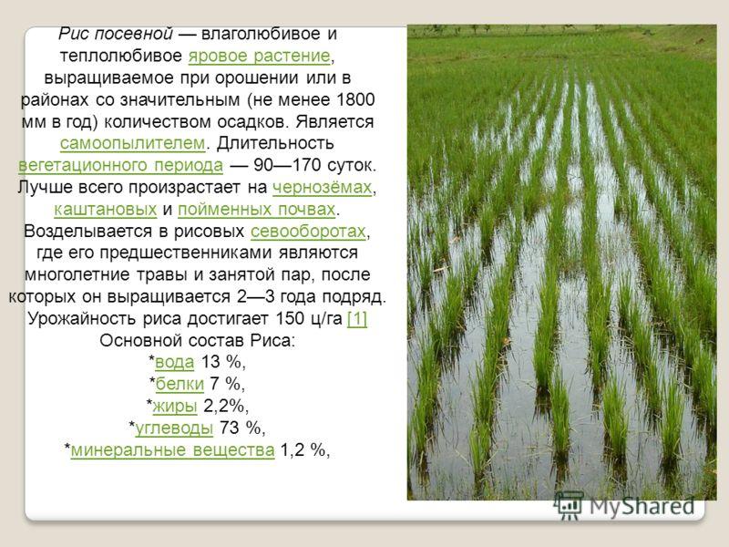 Рис посевной влаголюбивое и теплолюбивое яровое растение, выращиваемое при орошении или в районах со значительным (не менее 1800 мм в год) количеством осадков. Является самоопылителем. Длительность вегетационного периода 90170 суток. Лучше всего прои