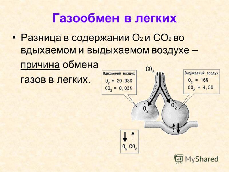 Газообмен в легких Разница в содержании О 2 и СО 2 во вдыхаемом и выдыхаемом воздухе – причина обмена газов в легких.