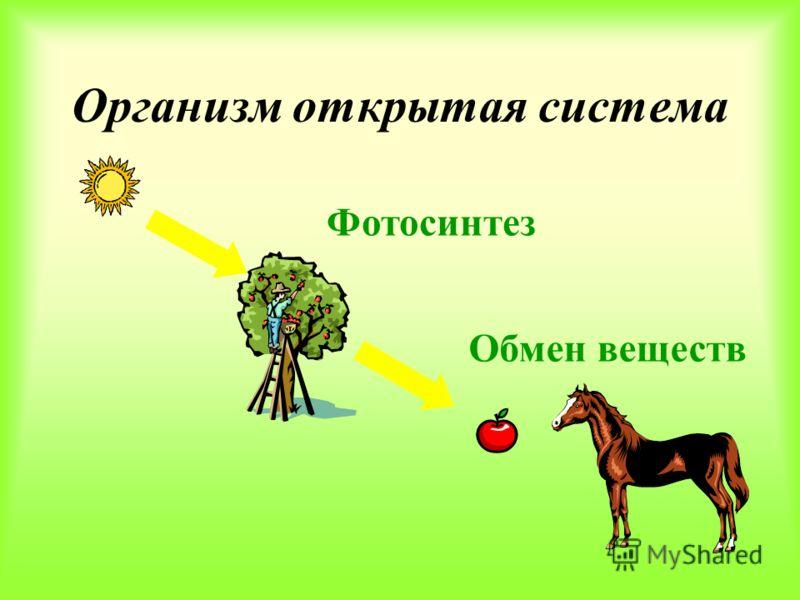 Растения должны получать из окружающей среды: Вода Минеральные соли Углекислый газ Кислород