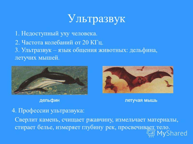 Ультразвук дельфинлетучая мышь 1. Недоступный уху человека. 2. Частота колебаний от 20 КГц. 3. Ультразвук – язык общения животных: дельфина, летучих мышей. 4. Профессии ультразвука: Сверлит камень, счищает ржавчину, измельчает материалы, стирает бель