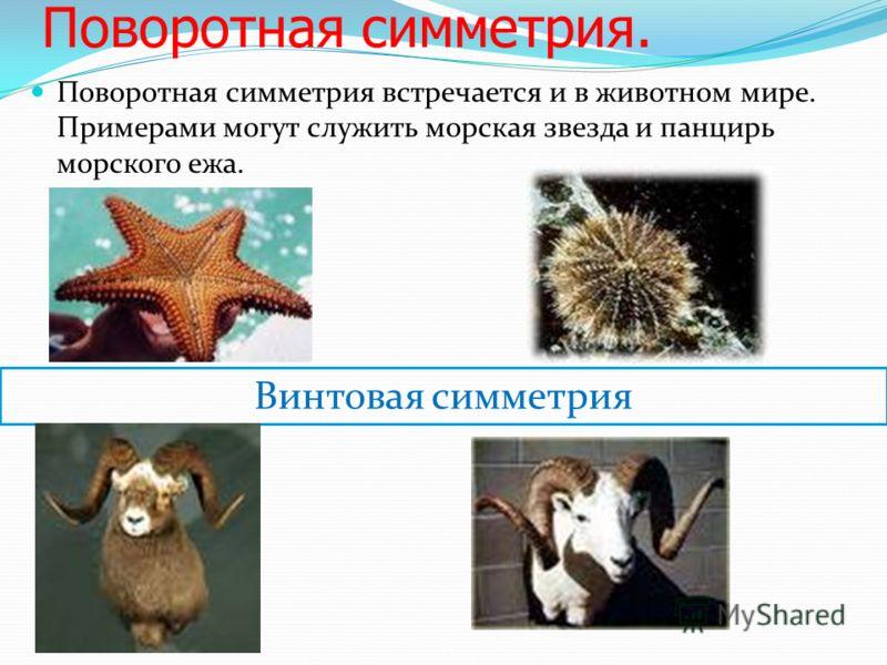 Поворотная симметрия. Поворотная симметрия встречается и в животном мире. Примерами могут служить морская звезда и панцирь морского ежа. Винтовая симметрия