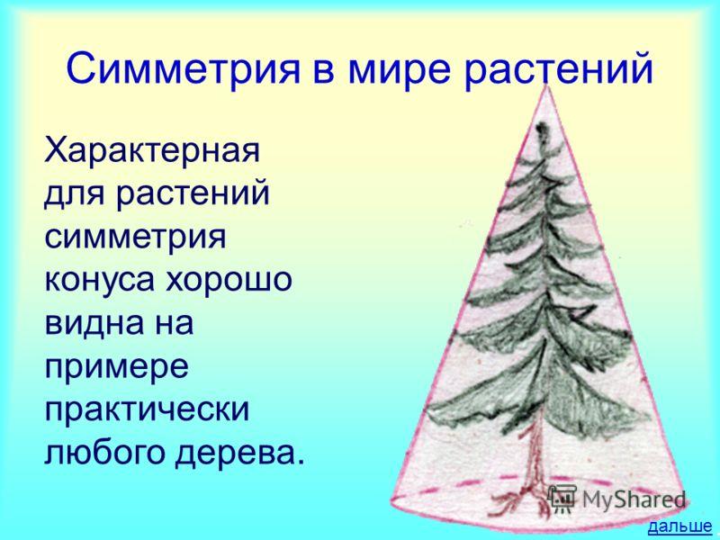 Характерная для растений симметрия конуса хорошо видна на примере практически любого дерева. Симметрия в мире растений дальше
