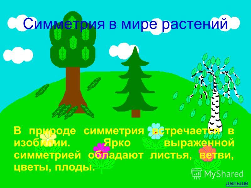 Симметрия в мире растений В природе симметрия встречается в изобилии. Ярко выраженной симметрией обладают листья, ветви, цветы, плоды. дальше