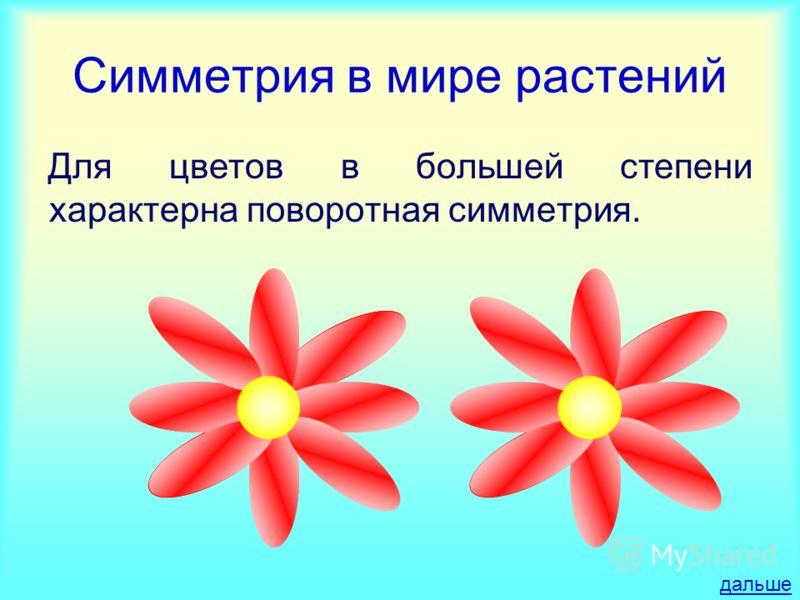 Симметрия в мире растений Для цветов в большей степени характерна поворотная симметрия. дальше