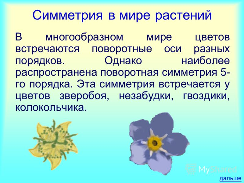 Симметрия в мире растений В многообразном мире цветов встречаются поворотные оси разных порядков. Однако наиболее распространена поворотная симметрия 5- го порядка. Эта симметрия встречается у цветов зверобоя, незабудки, гвоздики, колокольчика. дальш