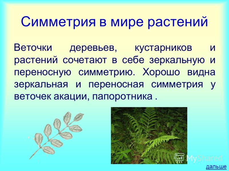 Симметрия в мире растений Веточки деревьев, кустарников и растений сочетают в себе зеркальную и переносную симметрию. Хорошо видна зеркальная и переносная симметрия у веточек акации, папоротника. дальше