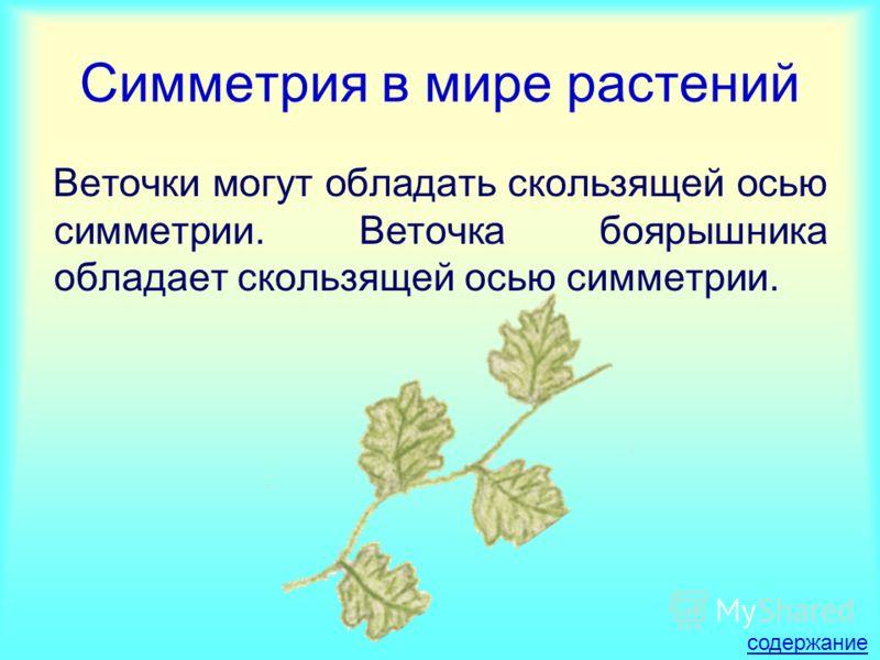 Симметрия в мире растений Веточки могут обладать скользящей осью симметрии. Веточка боярышника обладает скользящей осью симметрии. содержание