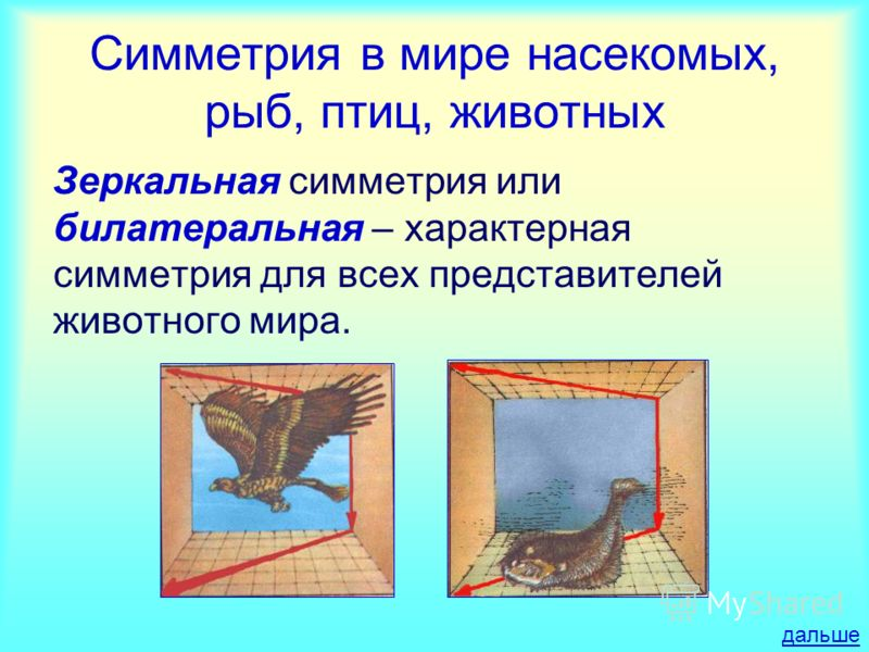 Симметрия в мире насекомых, рыб, птиц, животных Зеркальная симметрия или билатеральная – характерная симметрия для всех представителей животного мира. дальше