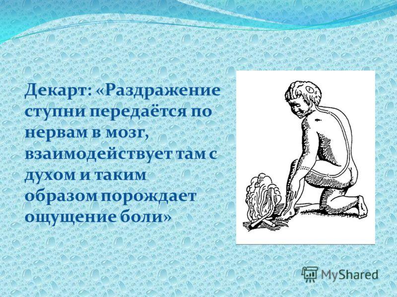 Декарт: «Раздражение ступни передаётся по нервам в мозг, взаимодействует там с духом и таким образом порождает ощущение боли»