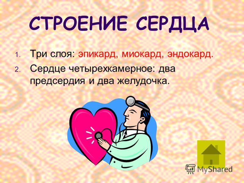 СТРОЕНИЕ СЕРДЦА 1. Три слоя: эпикард, миокард, эндокард. 2. Сердце четырехкамерное: два предсердия и два желудочка.