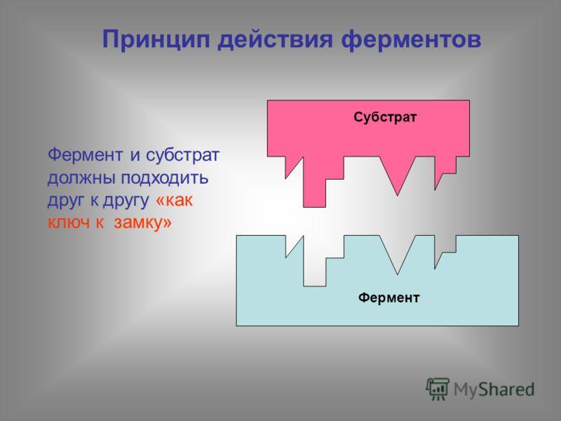 Принцип действия ферментов Субстрат Фермент Фермент и субстрат должны подходить друг к другу «как ключ к замку»