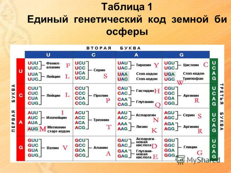 Таблица 1 Единый генетический код земной би осферы