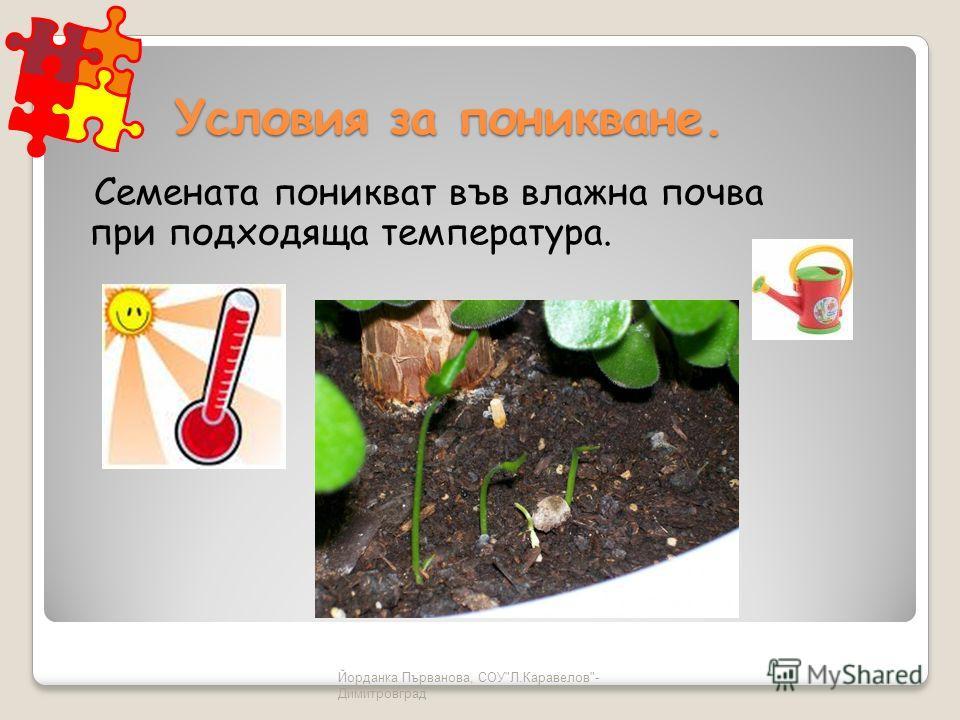 Йорданка Първанова, СОУЛ.Каравелов- Димитровград Условия за поникване. Семената поникват във влажна почва при подходяща температура.