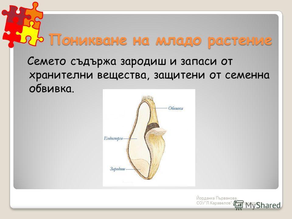 Йорданка Първанова, СОУЛ.Каравелов-Димитровград Поникване на младо растение Семето съдържа зародиш и запаси от хранителни вещества, защитени от семенна обвивка.