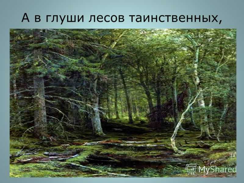 А в глуши лесов таинственных,