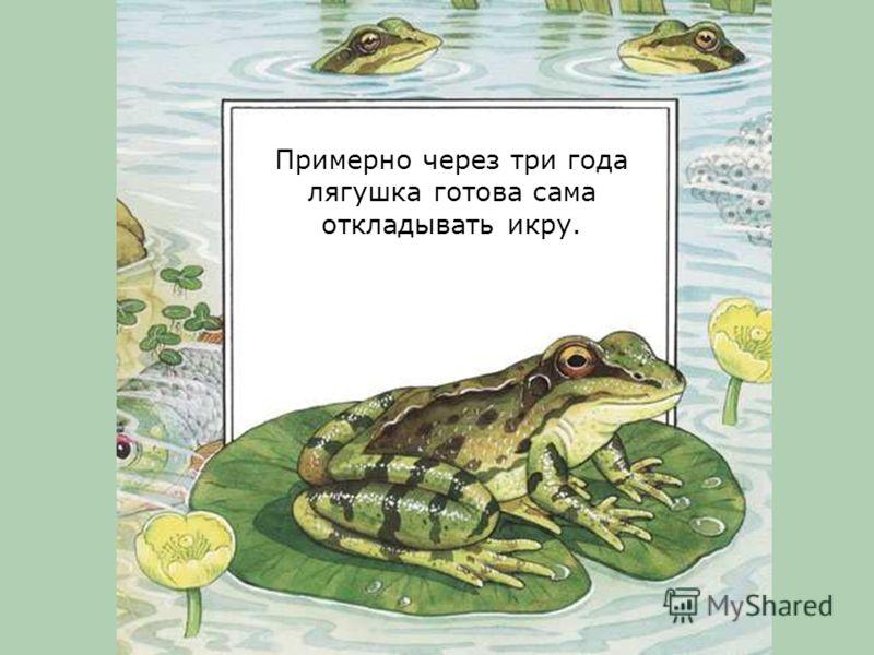 Лягушонок растет, и скоро превратится в настоящую лягушку.