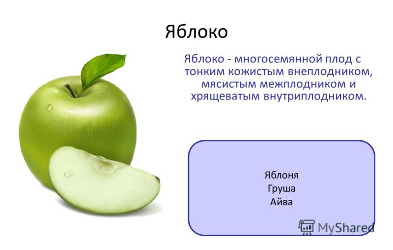 Яблоко Яблоко - многосемянной плод с тонким кожистым внеплодником, мясистым межплодником и хрящеватым внутриплодником. Яблоня Груша Айва