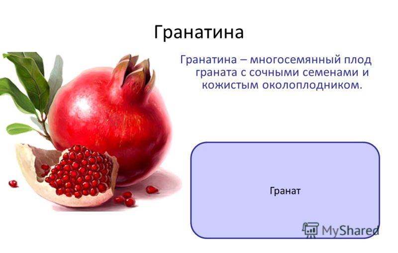 Гранатина Гранатина – многосемянный плод граната с сочными семенами и кожистым околоплодником. Гранат