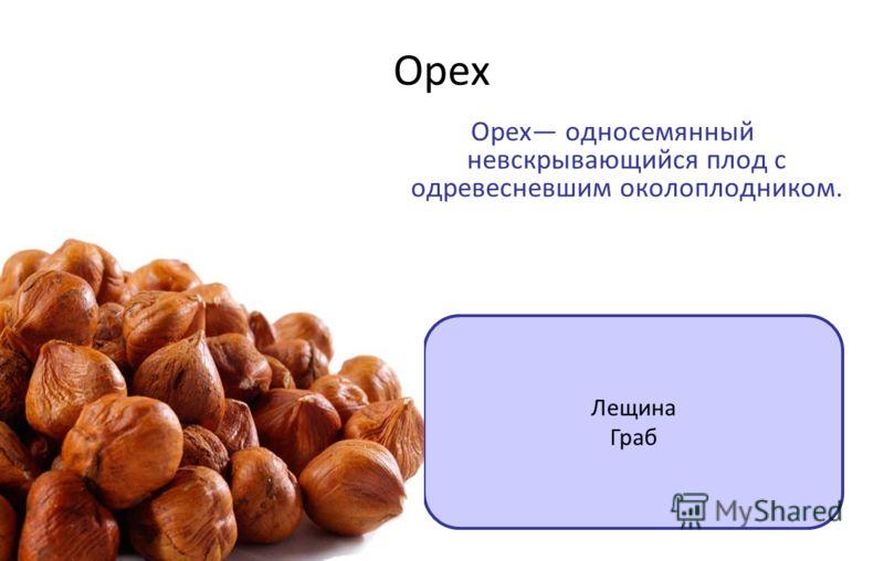 Орех Орех односемянный невскрывающийся плод с одревесневшим околоплодником. Лещина Граб