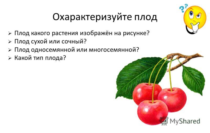 Охарактеризуйте плод Плод какого растения изображён на рисунке? Плод сухой или сочный? Плод односемянной или многосемянной? Какой тип плода?