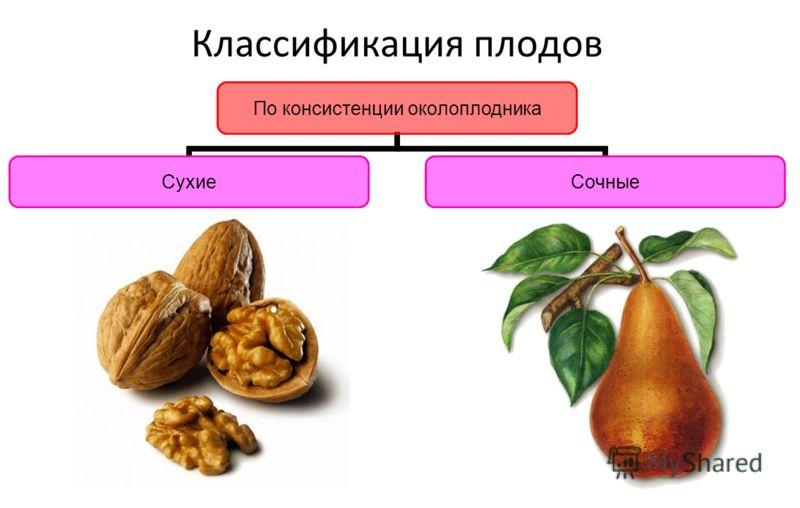 Классификация плодов По консистенции околоплодник а СухиеСочные