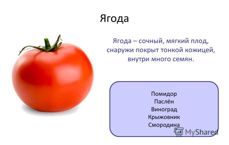 Ягода Ягода – сочный, мягкий плод, снаружи покрыт тонкой кожицей, внутри много семян. Помидор Паслён Виноград Крыжовник Смородина