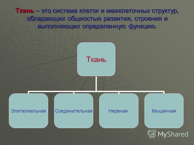 Ткань – это система клеток и межклеточных структур, обладающих общностью развития, строения и выполняющих определенную функцию. Ткань ЭпителиальнаяСоединительнаяНервнаяМышечная