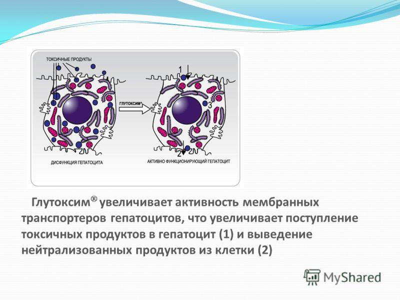 Глутоксим увеличивает активность мембранных транспортеров гепатоцитов, что увеличивает поступление токсичных продуктов в гепатоцит (1) и выведение нейтрализованных продуктов из клетки (2)