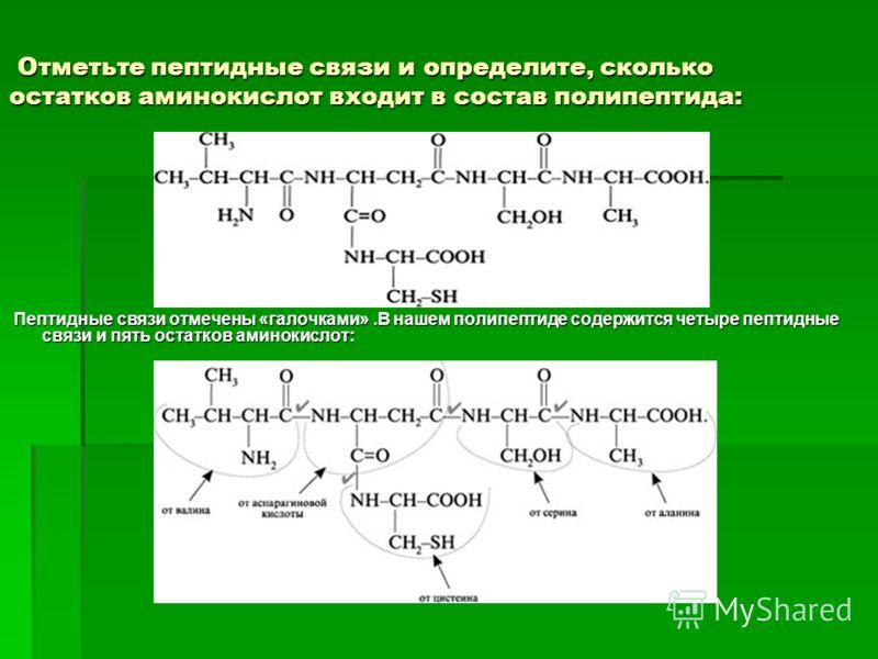 Отметьте пептидные связи и определите, сколько остатков аминокислот входит в состав полипептида: Отметьте пептидные связи и определите, сколько остатков аминокислот входит в состав полипептида: Пептидные связи отмечены «галочками».В нашем полипептиде
