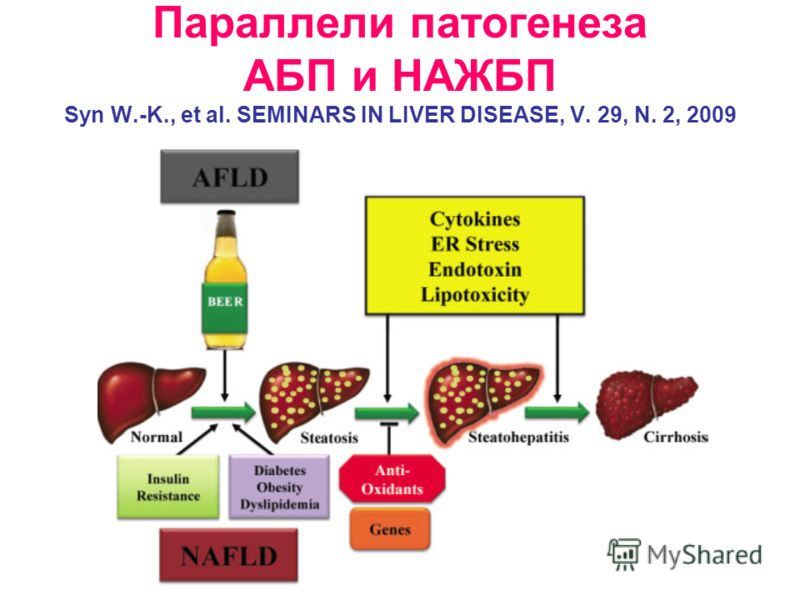 Параллели патогенеза АБП и НАЖБП Syn W.-K., et al. SEMINARS IN LIVER DISEASE, V. 29, N. 2, 2009