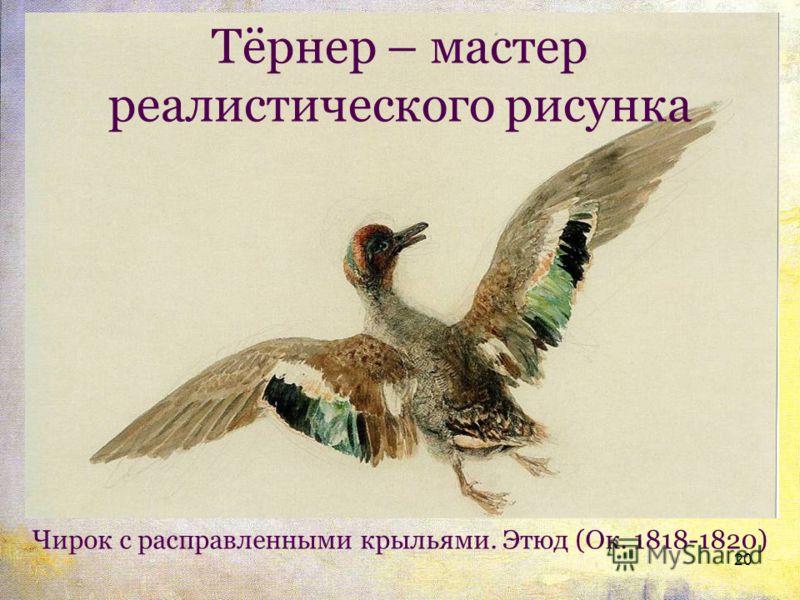 Тёрнер – мастер реалистического рисунка 20 Чирок с расправленными крыльями. Этюд (Ок. 1818-1820)