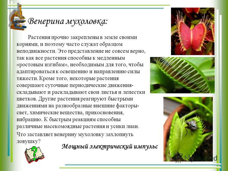 Венерина мухоловка: Растения прочно закреплены в земле своими корнями, и поэтому часто служат образцом неподвижности. Это представление не совсем верно, так как все растения способны к медленным «ростовым изгибам», необходимым для того, чтобы адаптир