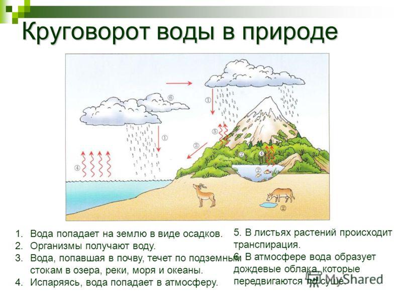 Круговорот воды в природе 1.Вода попадает на землю в виде осадков. 2.Организмы получают воду. 3.Вода, попавшая в почву, течет по подземным стокам в озера, реки, моря и океаны. 4.Испаряясь, вода попадает в атмосферу. 5. В листьях растений происходит т