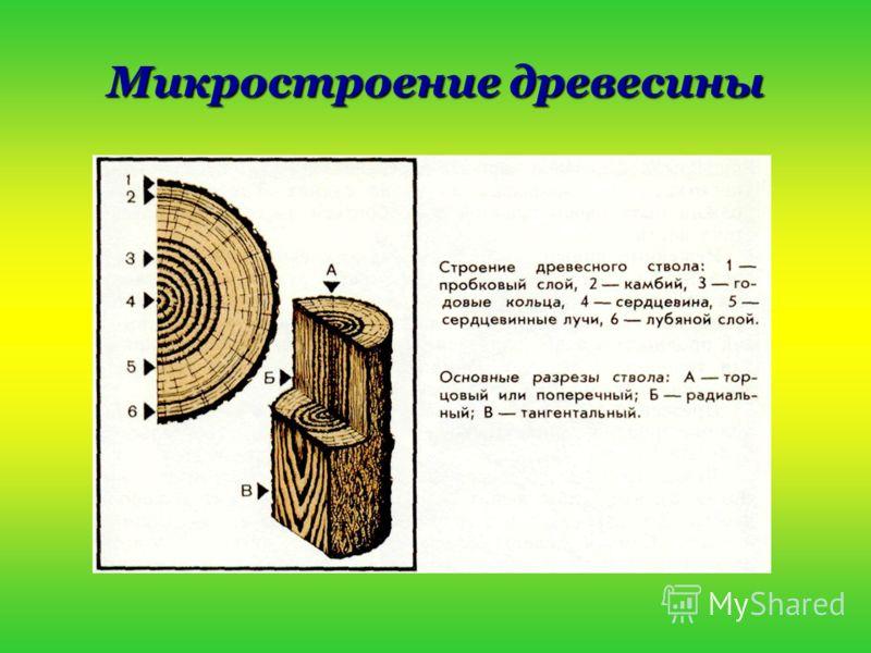 Микростроение древесины