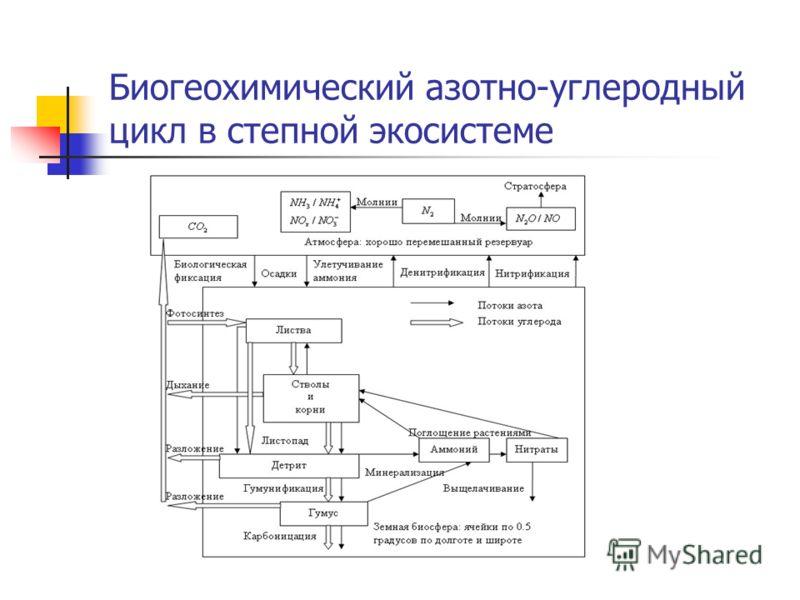 Биогеохимический азотно-углеродный цикл в степной экосистеме