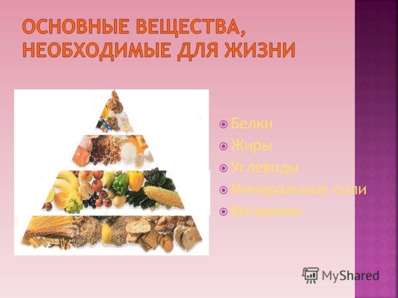 2 Белки Жиры Углеводы Минеральные соли Витамины