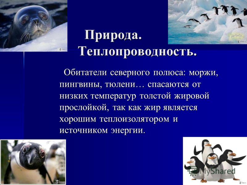 Природа. Теплопроводность. Обитатели северного полюса: моржи, пингвины, тюлени… спасаются от низких температур толстой жировой прослойкой, так как жир является хорошим теплоизолятором и источником энергии.